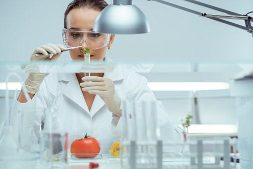 Gıda Mühendisliği Dersleri ve İçerikleri